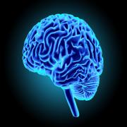 Neurologie 2 +++