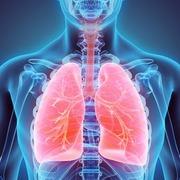 Y1 - Respiratory