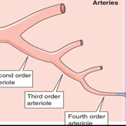 Ch 19 - Arteries And Veins
