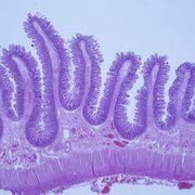 IMS - Histology