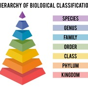 Taxonomy Packet