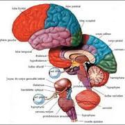 L2 Systèmes Nerveux et Fonctions Sensorielles