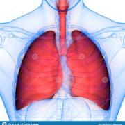 Pneumologie 1
