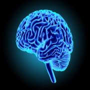 Neurologie 10 +++