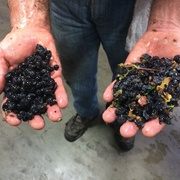 Expert Guide: Winemaking