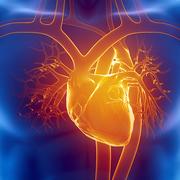 Y1 - Cardiovascular