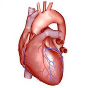Cardiovascular System - 3rd year
