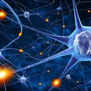 Neurologia - rok 4