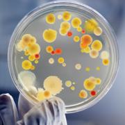 Microbiology 211 Lab