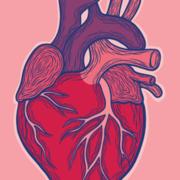 Systems : Cardiovascular