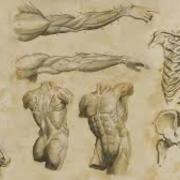 Core skills: anatomy (2)
