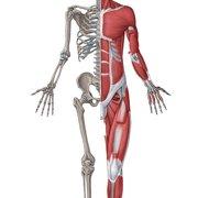 3. Anatomy