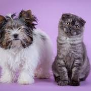 Dog and Cat Reproduction