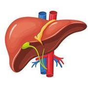 Système digestif - Examen II