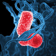 Microbiologie en Endodontie