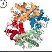 Proteinkemititis molbo edition 2k20