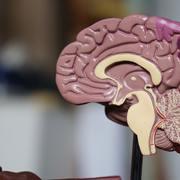 Neuro 101
