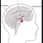 Endocrino - Examen I