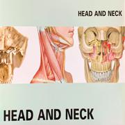 Head And Neck ~ Anatomy