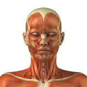 Anatomia (Cárie I)