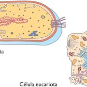 Partes de la celulas