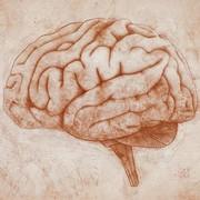 Neuroanatomía y neurofisiología