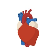 Junior Medicine- Cardiology