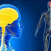 Life Sciences-Nervous System