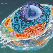 Biology 1115/2330