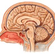 Neuroanatomía (Snell)