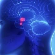 Fisiopatología Endócrino