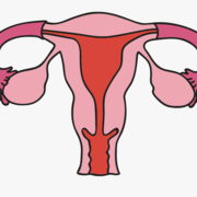 Phase 3a Gynaecology
