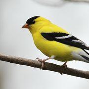 -Ornithologie