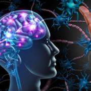 Système nerveux - Examen I