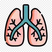 2. HDS Pulmonary