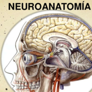 AnatoOrlando_Neuro20