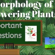 botany- morphology families