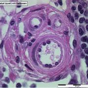 PBC 1060 Histologie et Embryologie Humaine