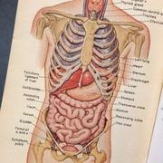 Human Biology 116