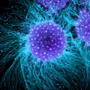 Fundamentals of the Living Cell