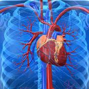 Fisiologia do Coração
