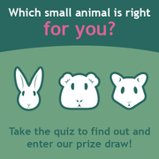 Small animal medicine - Clinical day tests