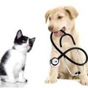 Veterinary Medical Nursing