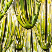 Alge(Ryk Protista)