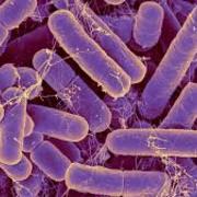 Microbiologie générale et infectiologie
