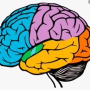 Système nerveux - Examen 2
