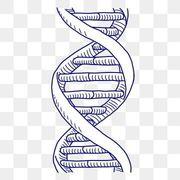 Genetica 2do p