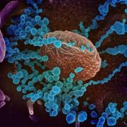 POM Immunology