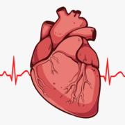 PHA2045 - Cardio I