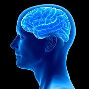 BRS - Neurology and neuroscience